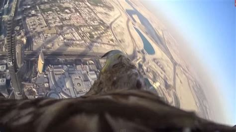 Video: Eagle descends from world's tallest building