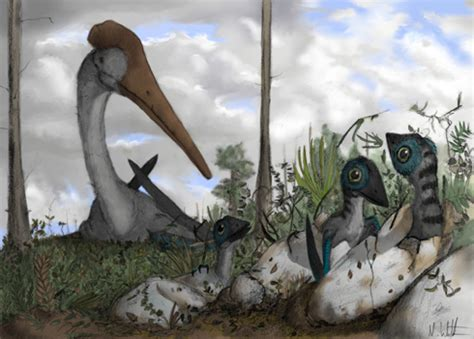 A spectacular new fossil provides insight on the sex lives