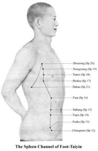 Chinese Acupuncture - Wing Chun Kwoon - Traditional Wing