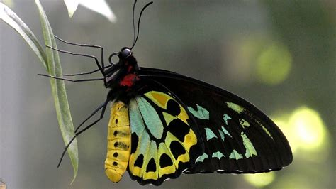 Butterflies in 4K at Melbourne Zoo Butterfly House - YouTube
