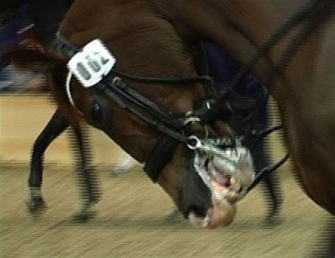 Blue Tongue Dressage Outrage Goes Viral and Global