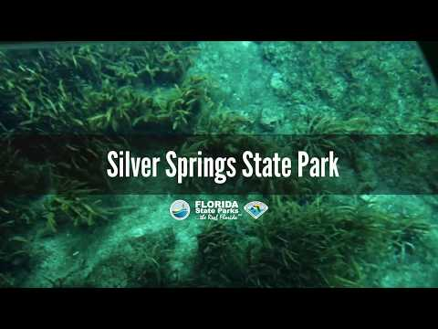 Silver Springs State Park, Florida « LIVING WITH MY ANCESTORS
