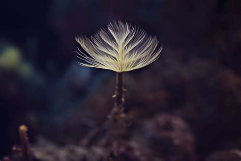 The Beauty Of Small Things Photography | Great Inspire