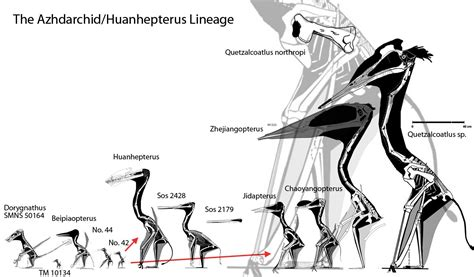 The Azhdarchid Lineage Up to Quetzalcoatlus
